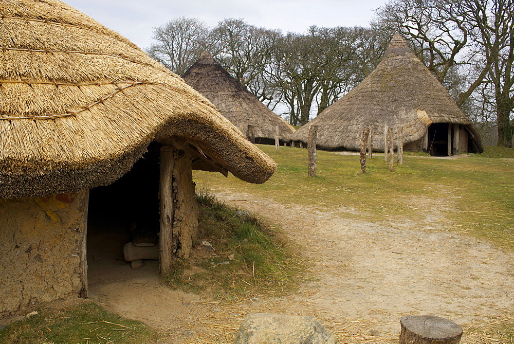Castell Henllys, a reconstructed Iron Age hill fort circa 600BC, Pembrokeshire Coast National Park, Pembrokeshire, Wales, United Kingdom, Europe - 397-2550