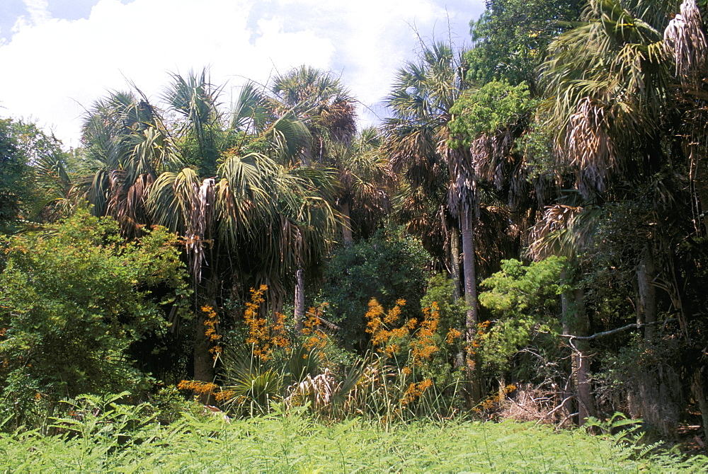 Sub tropical forest, Hunting Island State Park, South Carolina, United States of America, North America