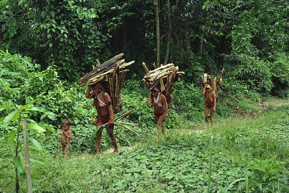 Yanomami indian women collecting wood, Brazil, South America