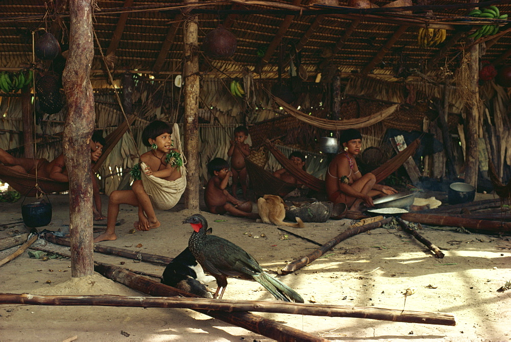 Jacu bird in hut with Yanomami Indians, Brazil, South America