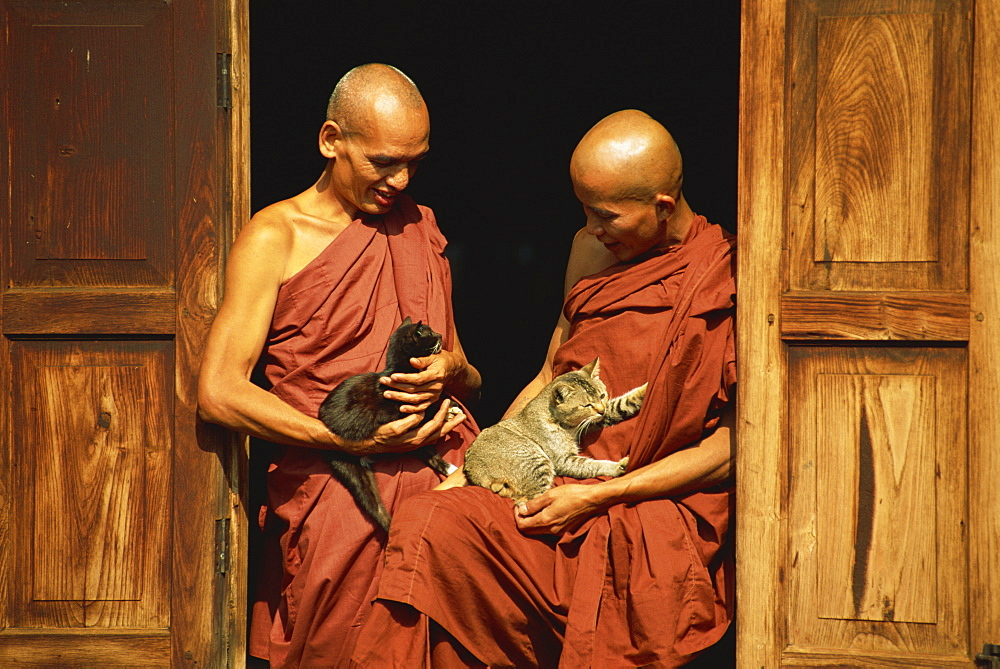 Monks with cats, Nga Hpe Monastery, Inle Lake, Myanmar (Burma), Asia - 450-2565