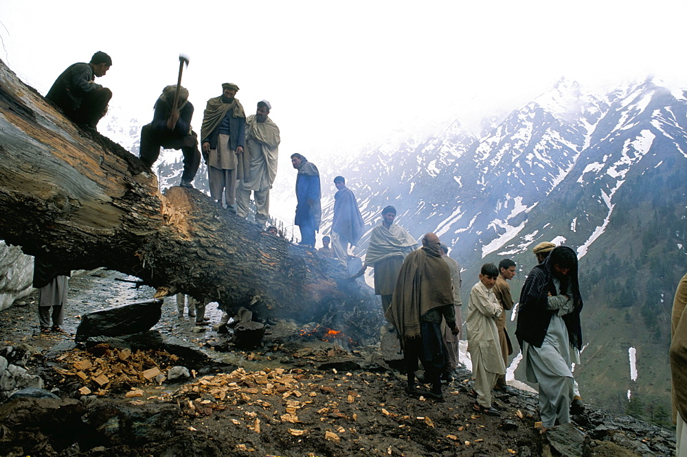 Clearning a tree-slide, Lowari Pass, Pakistan, Asia