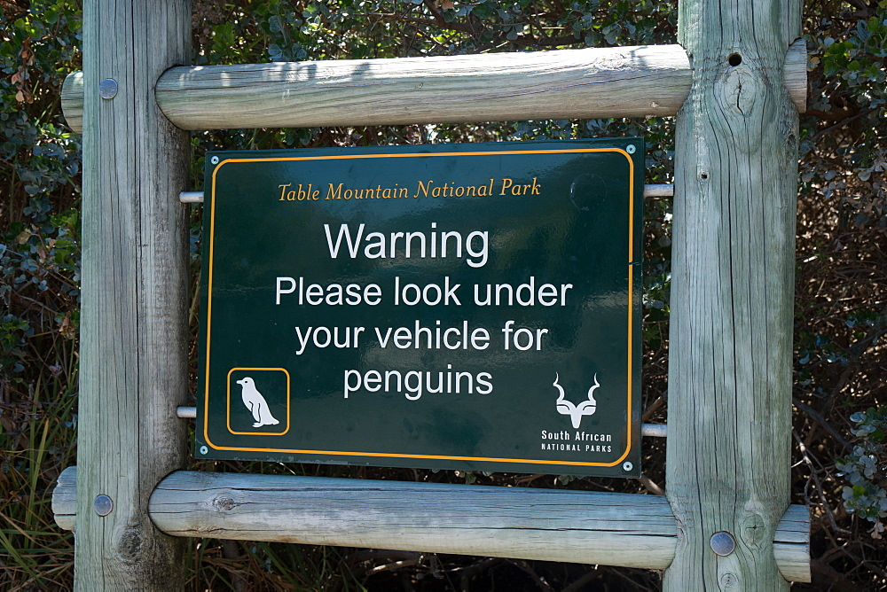 Warning sign to ckeck for penguins under your vehicle, car park, near Boulders Beach, Cape Town, South Africa