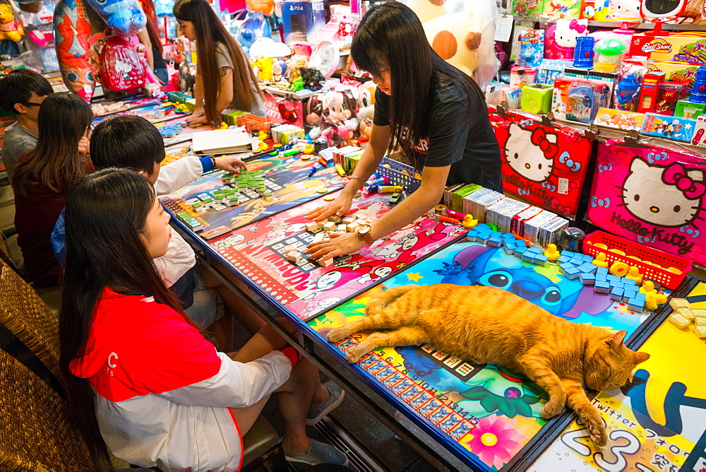 Beautiful ginger cat sprawled over game table while vendor sorts and sets up mahjong tiles for young customers, Taipei, Taiwan, Asia - 450-4219
