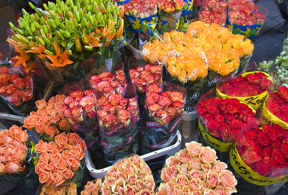 Tulips for sale in the Bloemenmarkt (flower market), Amsterdam, Netherlands, Europe