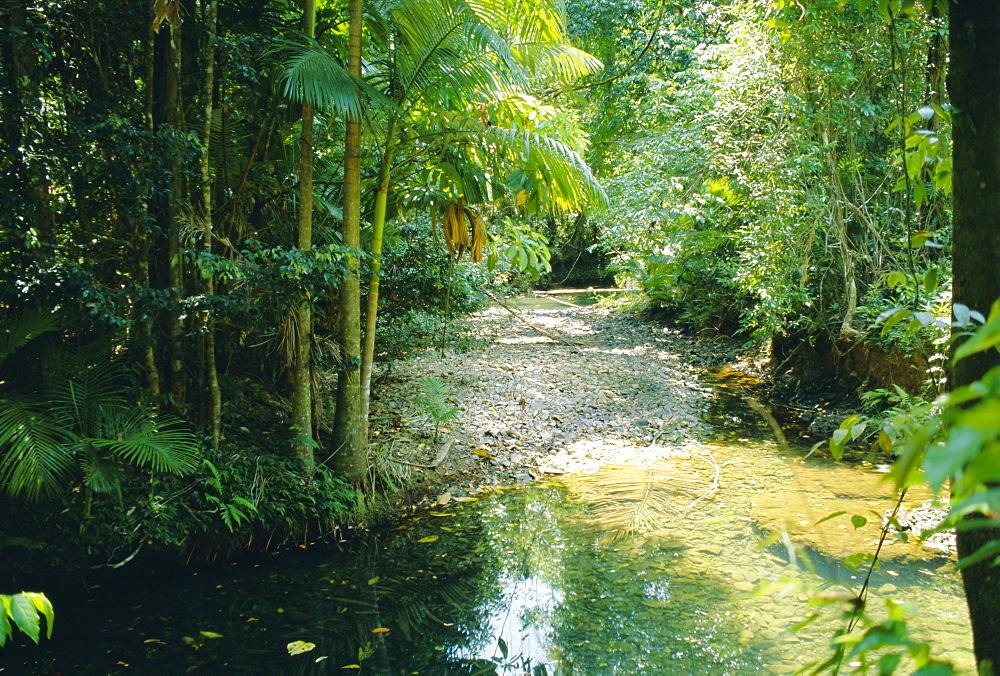 Rainforest in Cape Tribulation National Park, Queensland, Australia