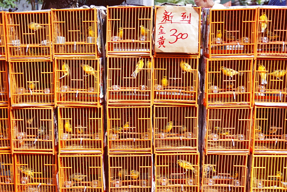 Caged birds for sale, Yuen Po Street, Bird Garden, Mong Kok, Kowloon, Hong Kong, China, Asia