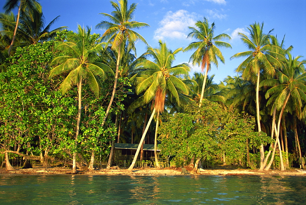 The beach, palm trees and cottages of Uepi Island resort in the Solomon Islands, Pacific Islands, Pacific