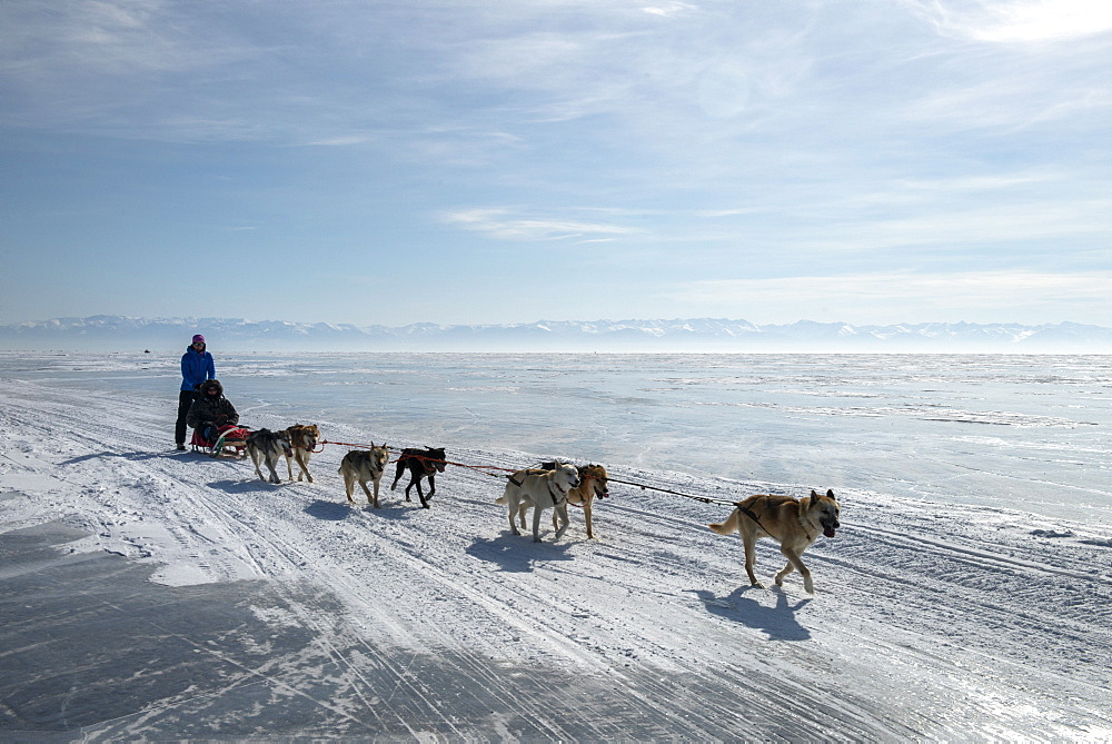 Visitors enjoying dog sledding on the ice in front of the village of Listvyanka, Irkutsk Oblast, Siberia, Russia, Eurasia