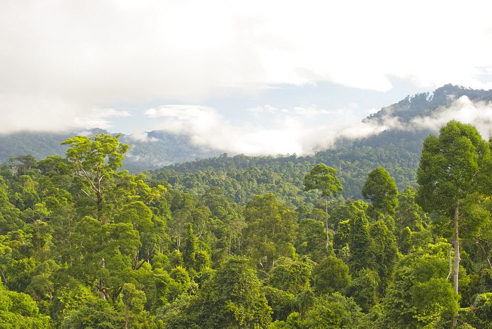 Mist rises from primary rainforest at dawn, Maliau Basin Conservation Area, Sabah, Borneo, Malaysia, Southeast Asia, Asia