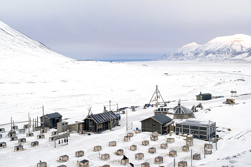 Husky dog sled operation where each dog has its own kennel raised off ground and seal carcasses are hung nearby to feed the animals, Svalbard, Arctic, Norway, Scandinavia, Europe