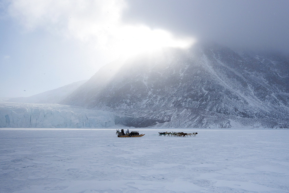 Inuit hunter and his dog team travelling on the sea ice, Greenland, Denmark, Polar Regions