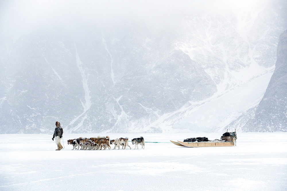 Inuit hunter walking his dog team on the sea ice in a snow storm, Greenland, Denmark, Polar Regions