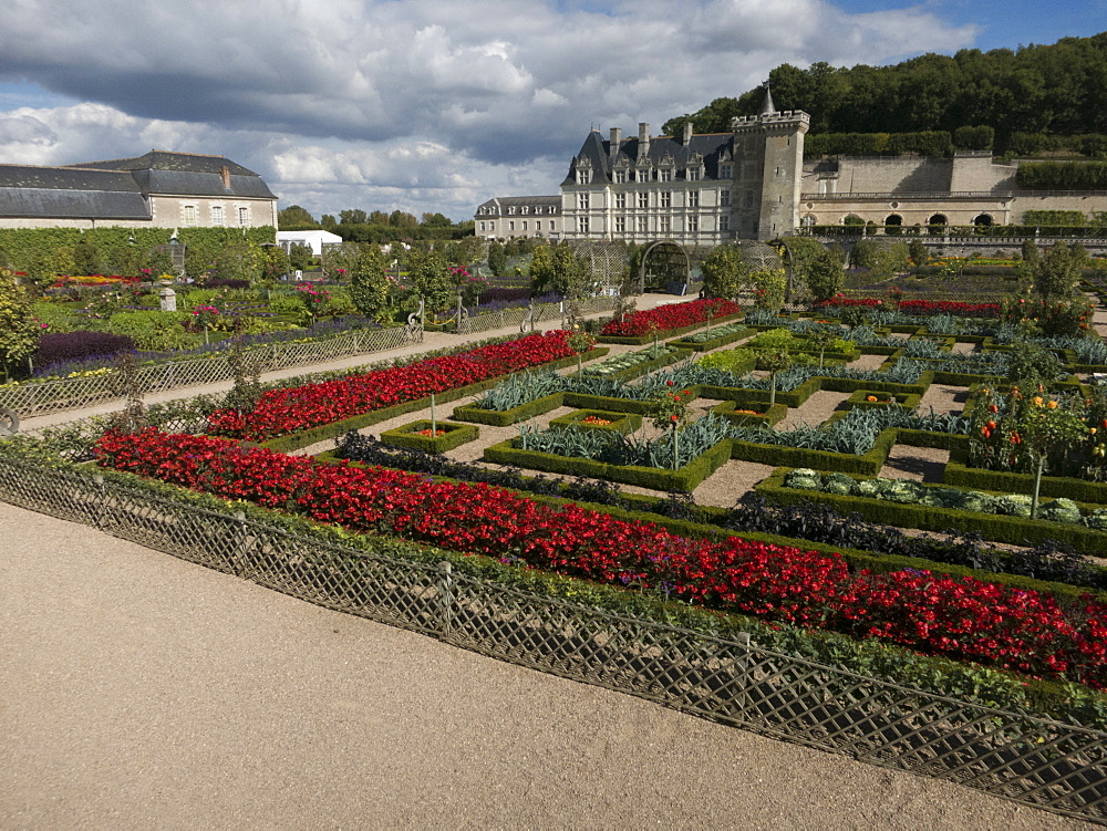 The kitchen gardens feature seasonal vegetables at the Chateau de Villandry, UNESCO World Heritage Site, Loire Valley near Tours, Indre et Loire, Centre, France, Europe