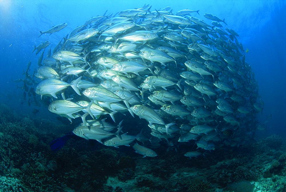 puerto galera diving philippines