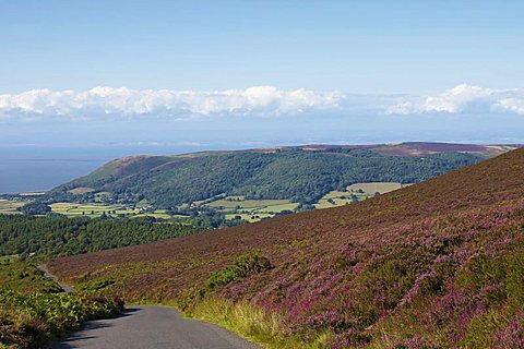 Exmoor National Park near Porlock, Somerset, England, United Kingdom, Europe