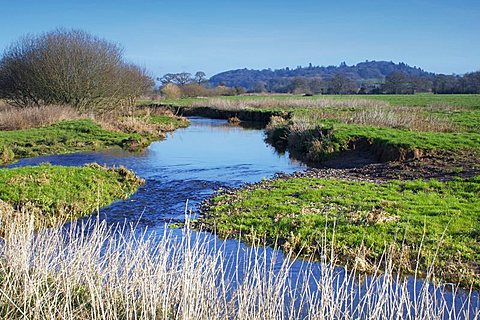River Culm, near Rewe, Devon, England, United Kingdom, Europe