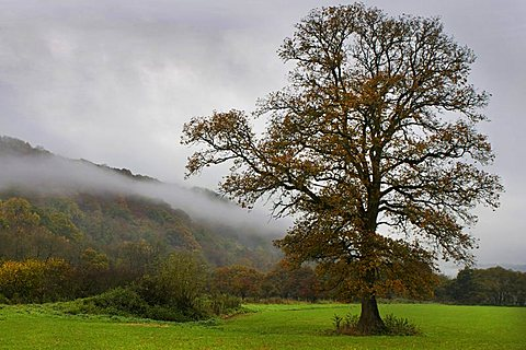 Misty trees, Exe Valley, Devon, England, United Kingdom, Europe