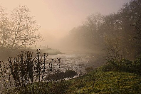 Misty morning, Exe Valley, Devon, England, United Kingdom, Europe