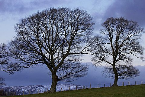 Trees near Crieff, Perthshire, Scotland, United Kingdom, Europe