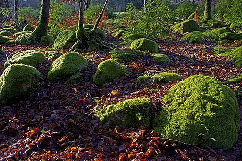 Mossy boulders, Dartmoor National Park, Devon, England, United Kingdom, Europe - 478-4854