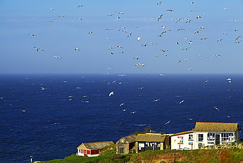 Lizard Point, The Lizard, Cornwall, England, United Kingdom, Europe - 478-4944