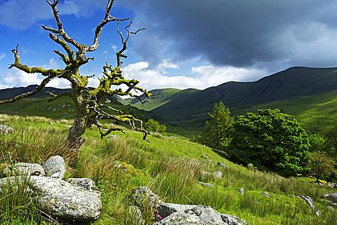 Woundale, Lake District National Park, Cumbria, England, United Kingdom, Europe