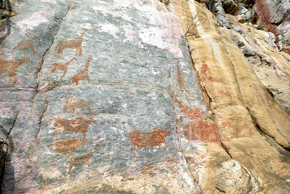 Rock paintings, Tsodilo Hills, UNESCO World Heritage Site, Botswana, Africa