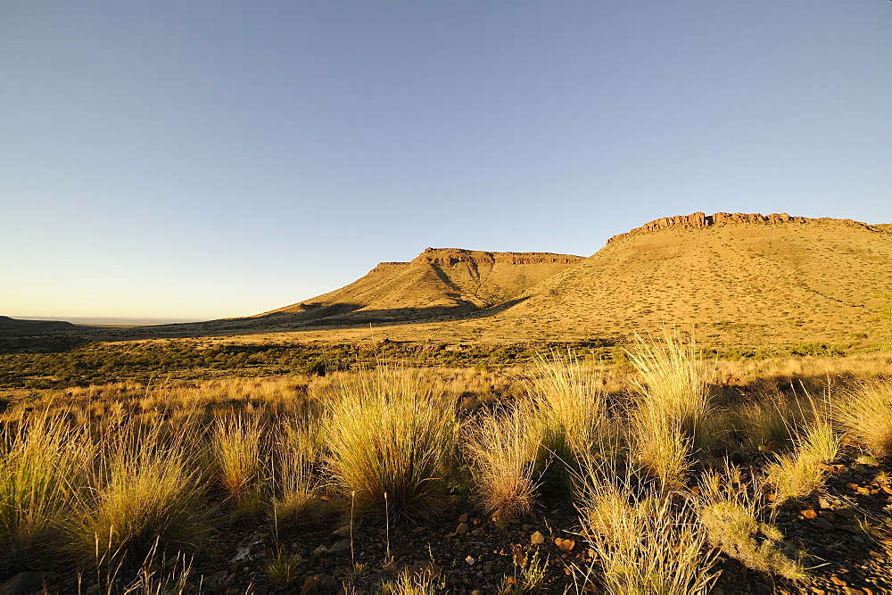 Early morning in the Karoo National Park, South Africa, Africa