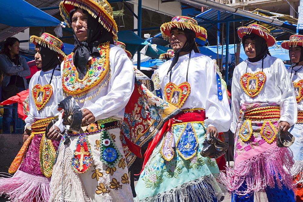 Preparation for the religious festival of Corpus Christi festival, llama, Urcos, Peru, South America