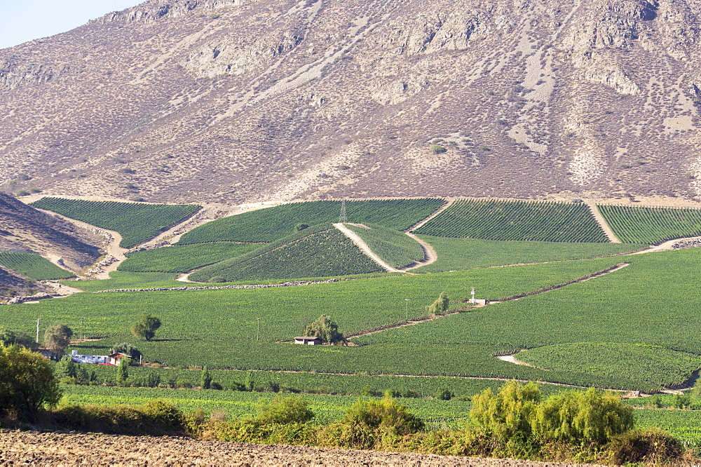 Wine production in the footills of the Andes, Valparaiso region, Chile, South America
