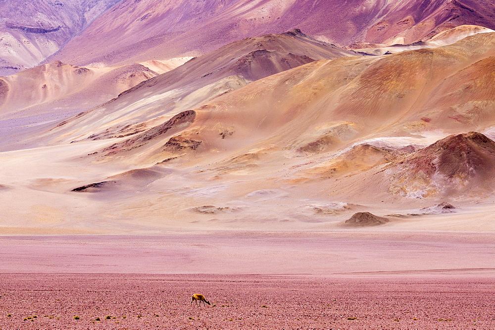 Atacama Desert, Chile, South America