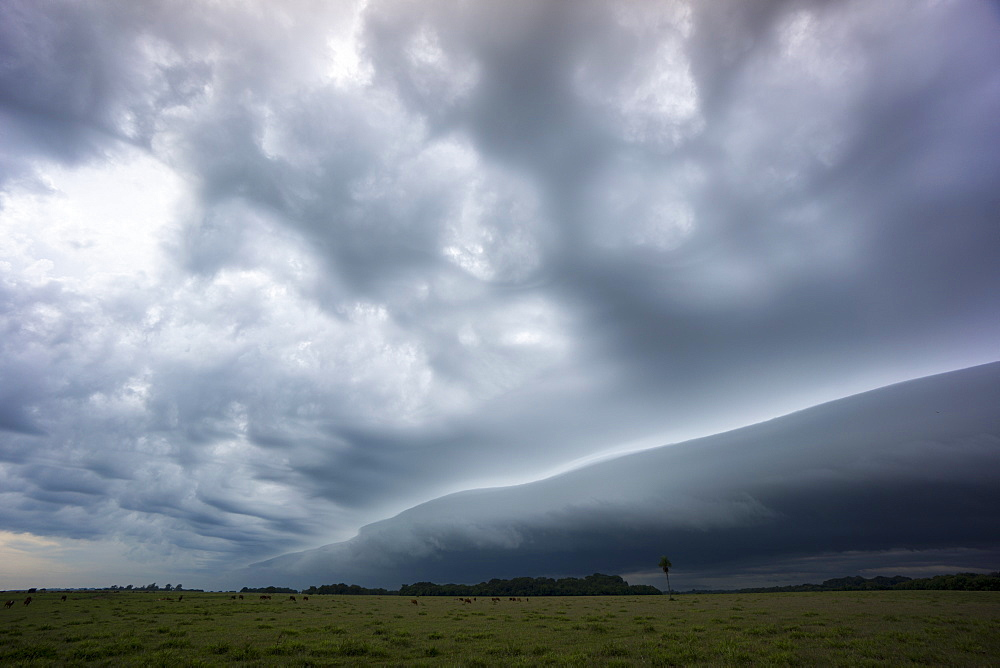 Stormy skies, Parque National Ibera, Argentina, South America