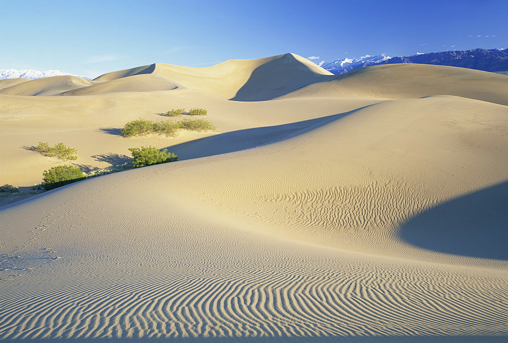 Sand dunes, Death Valley National Monument, California, United States of America, North America - 485-8311