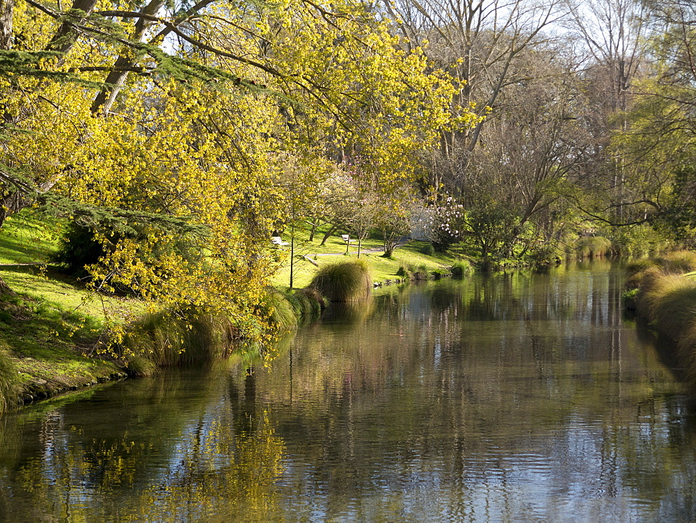 River Avon in Botanic Gardens, Christchurch, Canterbury, South Island, New Zealand, Pacific