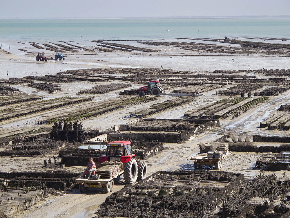 Oyster beds at low tide with tractors and harvesters, Cancale, Brittany, France, Europe