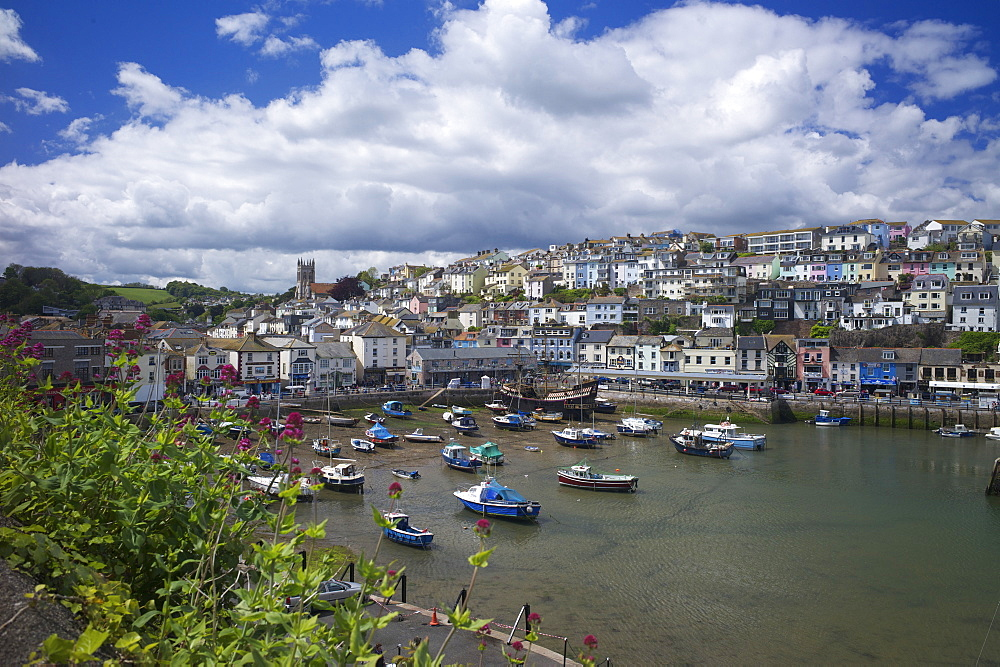 Brixham harbour, Devon, England, United Kingdom, Europe - 492-3547