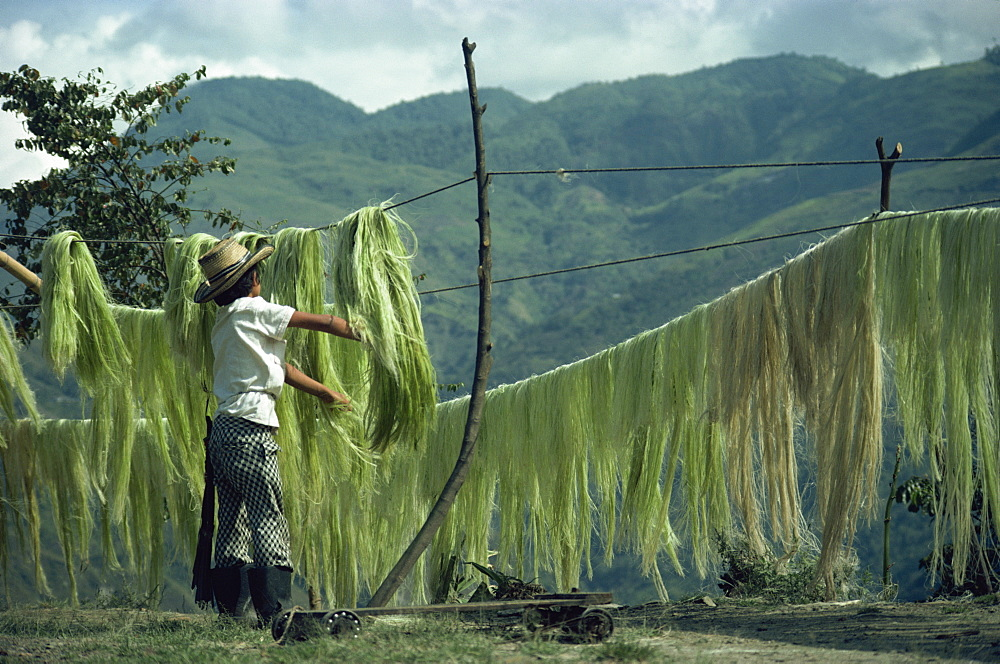 A boy hanging sisal out to dry on the road to Quindio in Colombia, South America