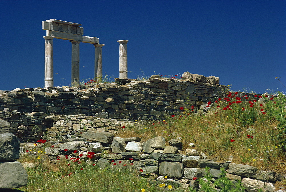 Temple of Apollo, Delos, UNESCO World Heritage Site, Greek Islands, Greece, Europe - 508-18569