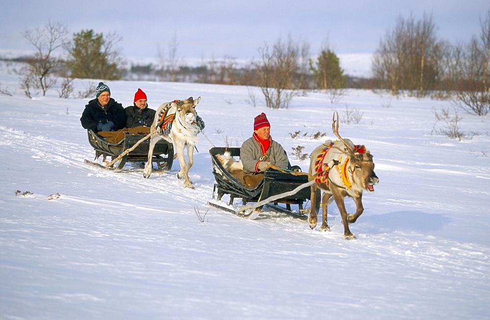 Southern Lapp man with reindeer sledge, Roros, Norway, Scandinavia, Europe