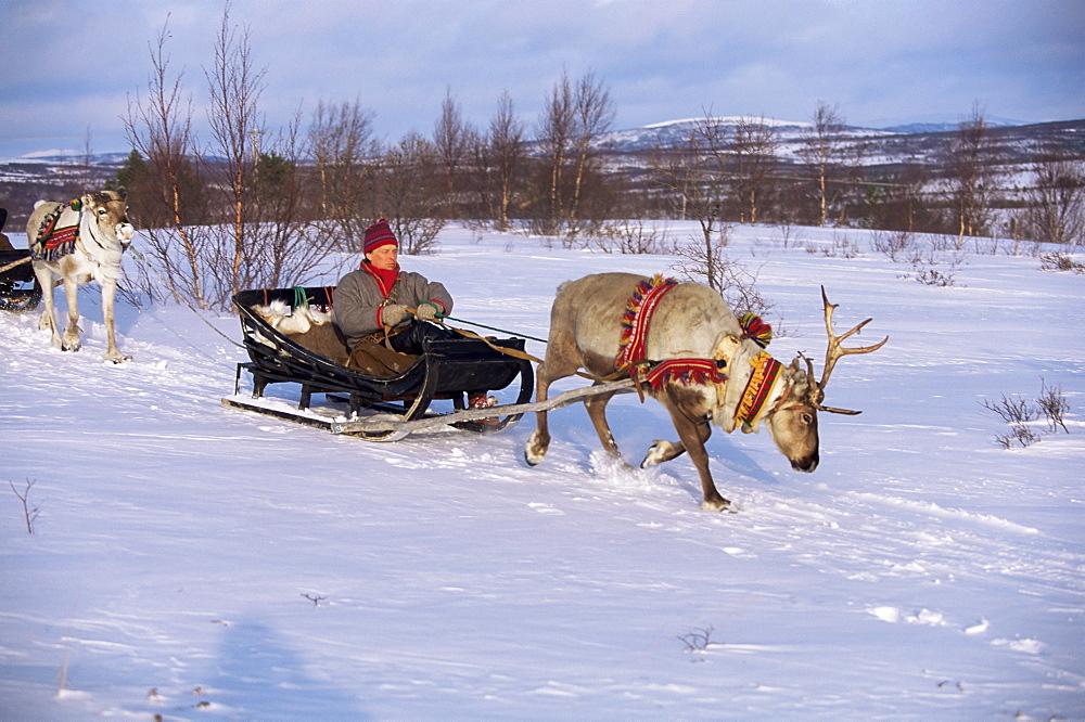 Southern Lapp with reindeer sledge, Roros, Norway, Scandinavia, Europe