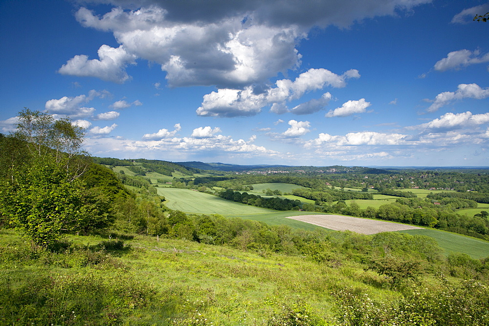 Summer view east along The Surrey Hills, from White Down, Dorking in the distance, North Downs, Surrey, England, United Kingdom, Europe - 526-3740