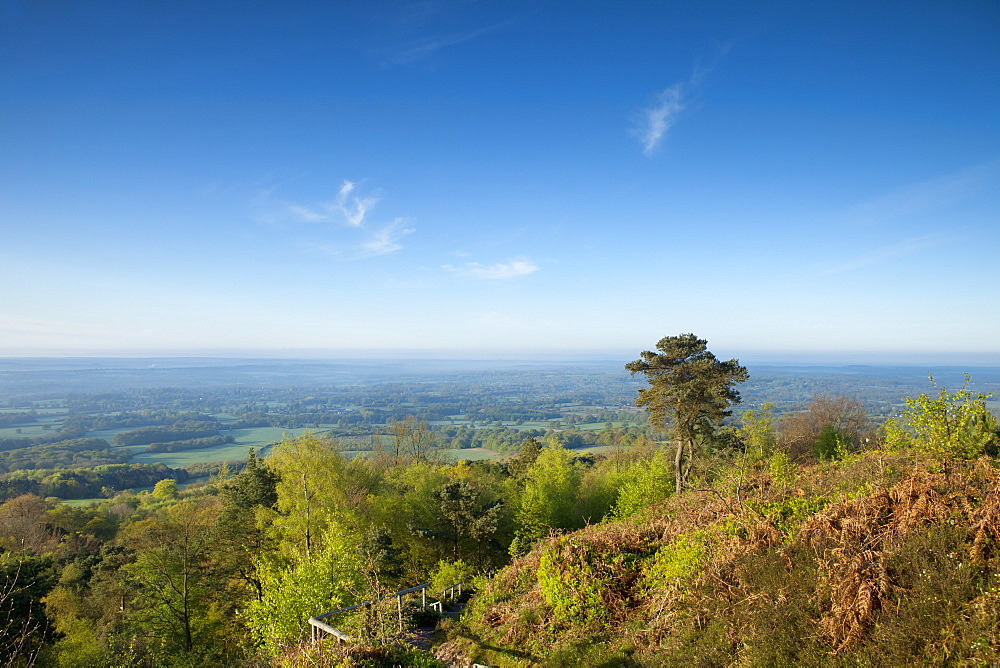 Leith Hill, highest point in south east England, view south towards The South Downs on a spring morning, Surrey Hills, Greensand Way, Surrey, England, United Kingdom, Europe - 526-3750