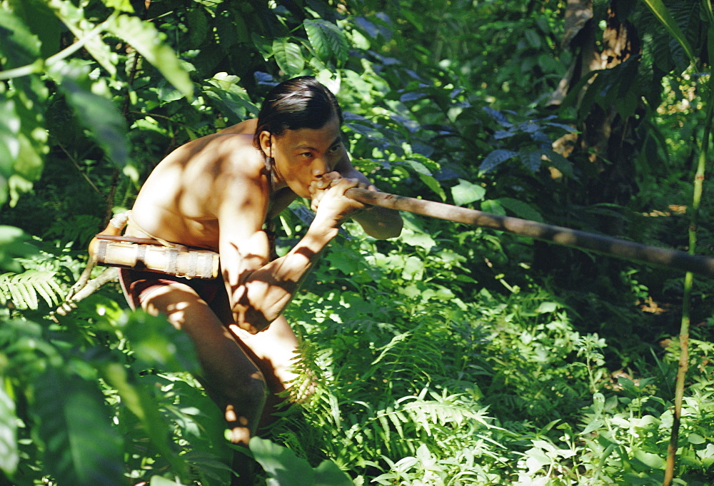 Punan man using a blow-pipe, Lasam, Borneo, Asia