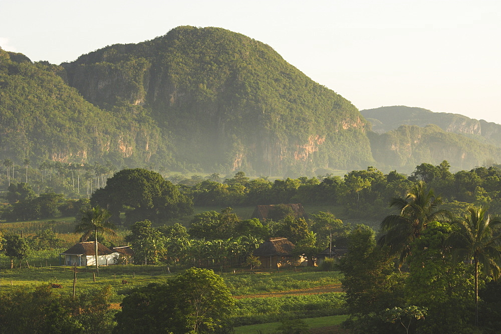 Fertile plain with little farm and typical haystack hills, Vinales, UNESCO World Heritage Site, Pinar del Rio province, Cuba, West Indies, Central America