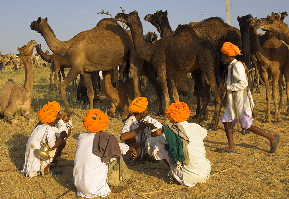 Men in bright turbans at huge camel and cattle fair for semi nomadic tribes, Pushkar Mela, Pushkar, Rajasthan state, India, Asia