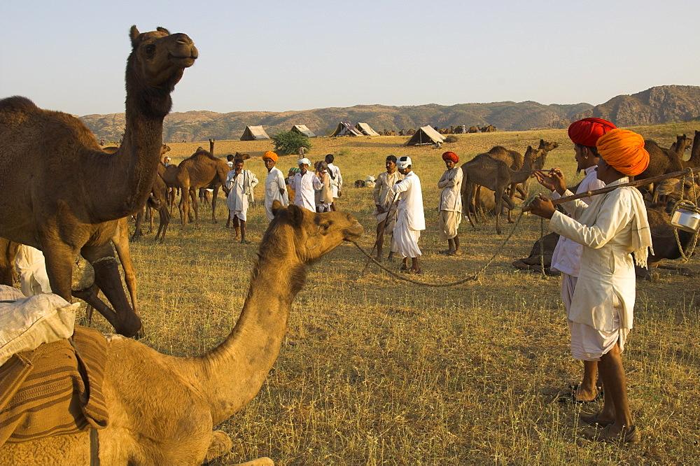 Men in bright turbans at huge camel and cattle fair for semi nomadic tribes, Pushkar Mela, Pushkar, Rajasthan state, India, Asia - 557-2979