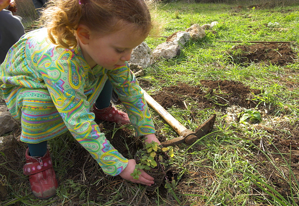 Young girl planting a seedling tree during Tu Bishvat, Jewish Festival of Trees, Museum of Nature, Jerusalem, Israel, Middle East