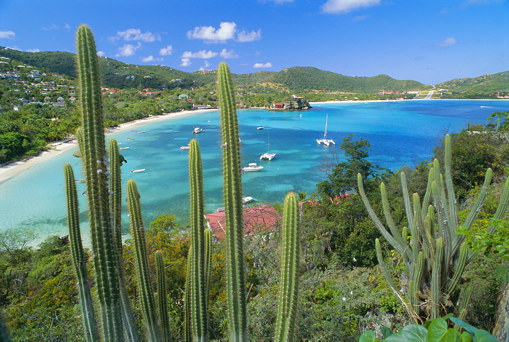 Cactus plants and Bay of St. Jean, St. Barthelemy, Caribbean, West Indies, Central America