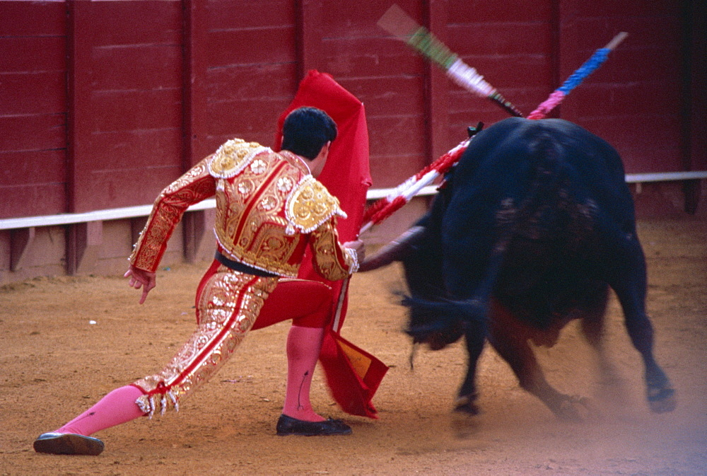 Steering the bull by left horn tip, bullfighting, Spain, Europe - 574-941